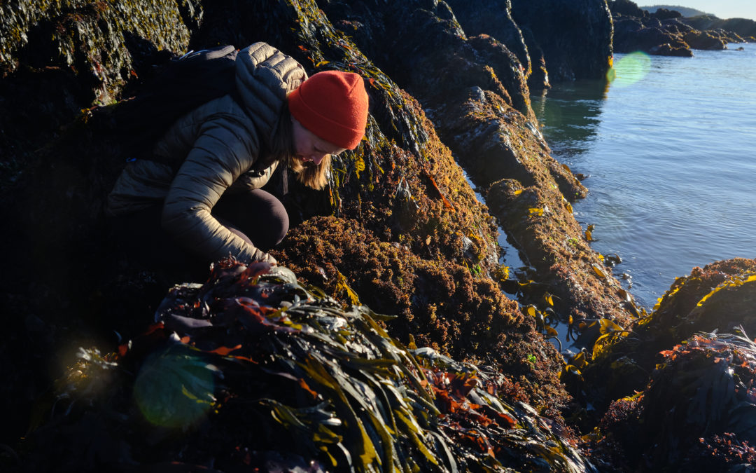Seaweeds are Superstars!